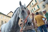 """Siena 02/07/2013: Palio di Siena. Il palio del mese di Luglio è dedicato alla festa di Santa Maria di Provenzano. In ogni Palio prendono parte massimo 10 delle 17 contrade presenti nella città. La scelta viene estratta a sorte. La contrada dell'Oca si è aggiudicato il Palio con il cavallo """"Guess"""" guidato dal fantino Giovanni Atzeni conosciuto come """"Tittia"""". Nella foto l'arrivo del cavallo Guess davanti alla chiesa di Santa MAria di Provenzano tra un bagno di folla.   Foto Adamo Di Loreto/BuenaVista*photo"""