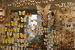 butterfly exhibit, Santa Barbara Museum of Natural History
