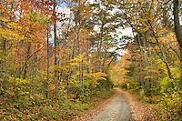 Rural Forest Service road, Pisgah National Forest near Brevard, North Carolina