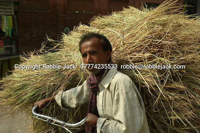 Man with dried grass on bicycle in the Paharganj district of New Delhi, India.