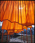 Christo's Gates: Central Park, NYC.