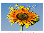Sunflowers 2007 self-published calendar