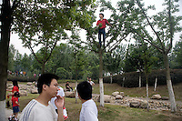 Spectators, including one in the trees, watch the Olympic torch pass by during the Nanjing, China, leg of the 2008 Olympic Torch Relay.  .