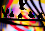 Pigeons silhouetted against neon lights, New York City, New York, USA.