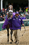 November 2, 2018: Jaywalk #7 heads back to the barn after winning the Tito's Handmade Vodka Juvenile Fillies on Breeders' Cup World Championship Friday at Churchill Downs on November 2, 2018 in Louisville, Kentucky.Casey Phillips/Eclipse Sportswire/CSM