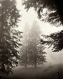 FRANCE, Val-de-Travers, Creux du Van Canyon, trees and fog in the countryside, Jura Wine Region (B&W)