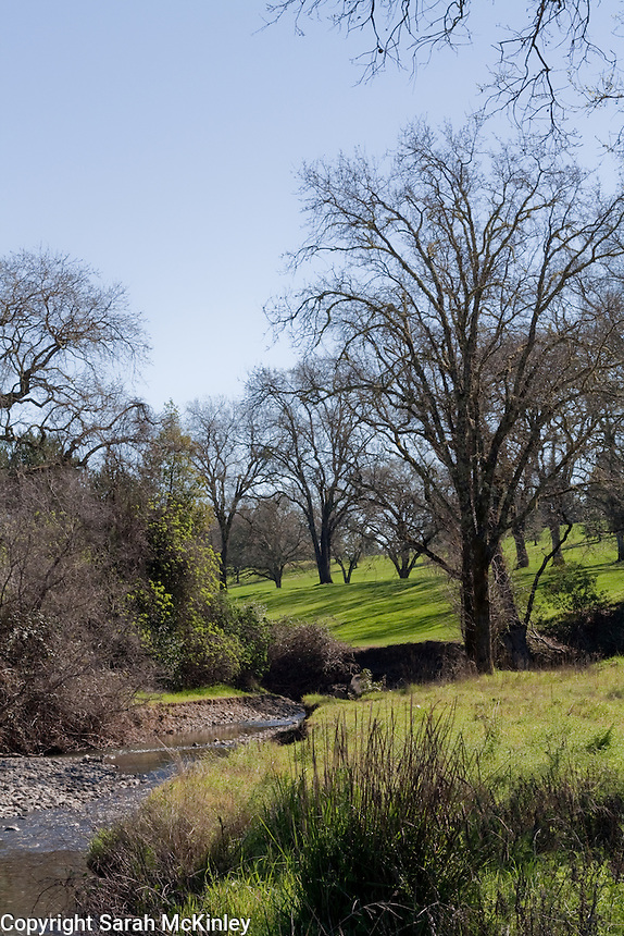 The creek flows through Low Gap Park, with oak trees on the green grassy landscape, in Ukiah in Mendocino County in Northern California.