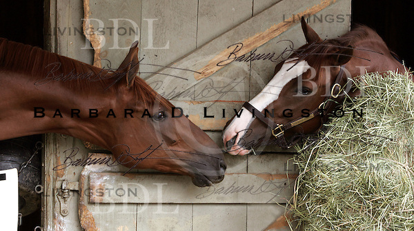 Electrified (left) and Kirkwood Ranger (right), Todd Pletcher trainees, at Saratoga's Oklahoma track in October 2004. Saratoga Race Course, Saratoga Racetrack, beautiful horse racing, Thoroughbred racing, horse, equine, racehorse, morning mood