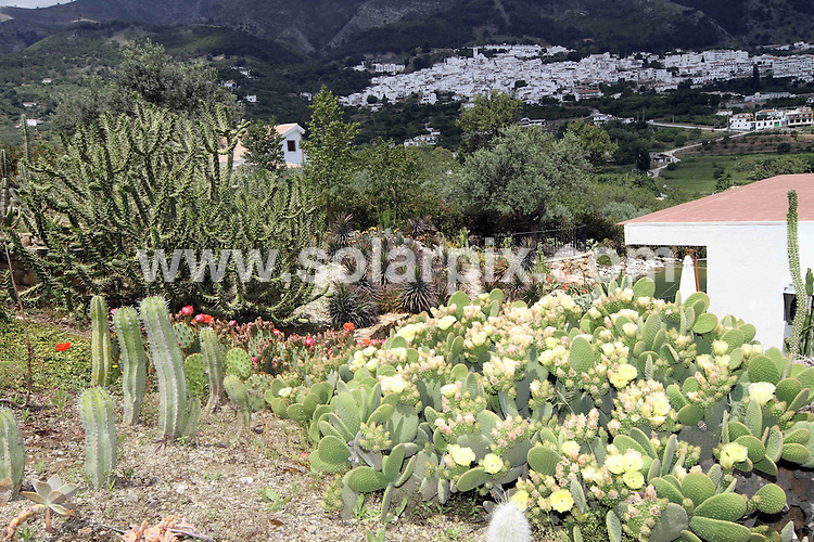 **ALL ROUND PICTURES FROM SOLARPIX.COM**                                             **WORLDWIDE SYNDICATION RIGHTS EXCEPT SPAIN & SOUTH AMERICA - NO SYNDICATION IN SPAIN OR SOUTH AMERICA**                                                                                  Caption:  Casarabonela, near Malaga in Spain,  has the largest garden of cactus, or cacti, in Europe, with about 2,500 species. . The garden Mora i Bravard has 8,000 square meters of cacti from  southern Africa, Madagascar, the deserts of southern Mexico and the United States,  Ecuador, Brazil, Chile, Argentina,  tropical Africa, , India, Australia, and Europe. There is also a special area dedicated to the Canary Islands. Casarabonela, Malaga, Spain. 27 May 2011                                                                             This pic: Mora i Bravard Cactus garden                                                                                             JOB REF: 13464 MPA       DATE: 27_05_2011                                                           **MUST CREDIT SOLARPIX.COM OR DOUBLE FEE WILL BE CHARGED**                                                                      **MUST AGREE FEE BEFORE ONLINE USAGE**                               **CALL US ON: +34 952 811 768 or LOW RATE FROM UK 0844 617 7637**