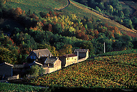 Fall color in the Beaujolais wine country north of Lyon, France.