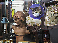 Europe/France/Ile de France/75011/Paris: Chat dans la vitrine d'un antiquaire Rue Oberkampf
