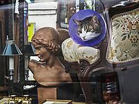 Europe/France/Ile de France/75011/Paris: Chat dans la vitrine d'un antiquaire Rue Oberkampf