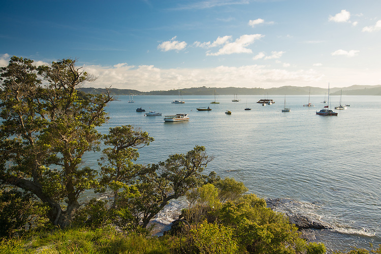Early morning Pahia Harbour, Bay of Islands, New ZealandNew Zealand - stock photo, canvas, fine art print