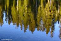 Silver firs reflected in Sand Lake.