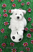 Xavier, ANIMALS, dogs, photos+++++,SPCHDOGS897,#a# Hunde, perros