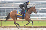 November 1, 2018: Vale Dori (ARG), trained by Bob Baffert, exercises in preparation for the Breeders' Cup Distaff at Churchill Downs on November 1, 2018 in Louisville, Kentucky. Jamey Price/Eclipse Sportswire/CSM