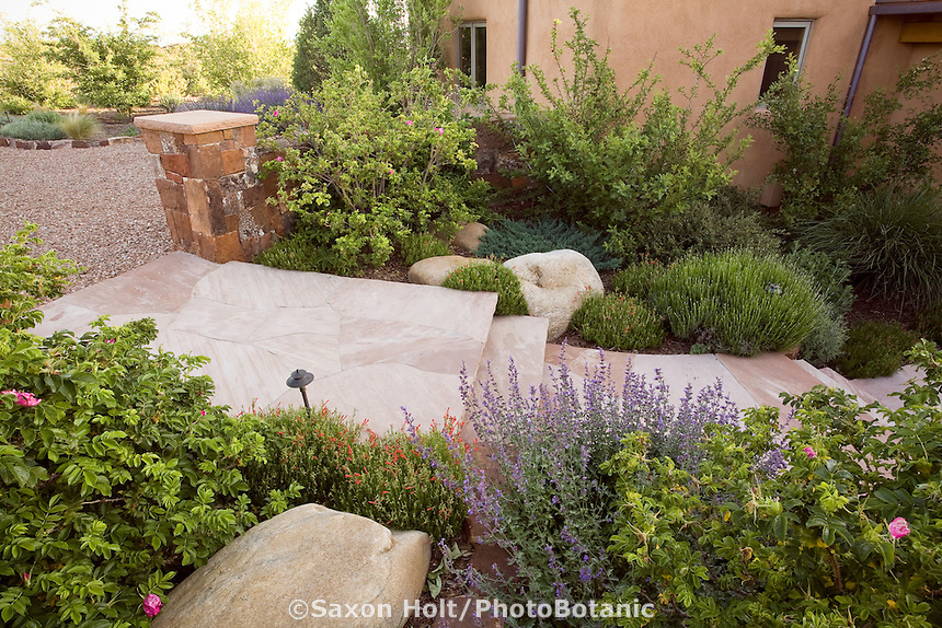 Flagstone entry path New Mexico xeriscape, dry landscape, drought tolerant garden