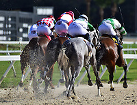 TAMPA, FL - February 10: A tight pack moves down the stretch in the Suncoast Stakes at Tampa Bay Downs on February 10, 2018 in Tampa, FL. (Photo by Taylor Gross/Eclipse Sportswire/Getty Images.)