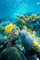 Underwater reef scenic<br /> Snorkel trail at Trunk Bay<br /> Virgin Islands National Park<br /> St. John<br /> U.S. Virgin Islands