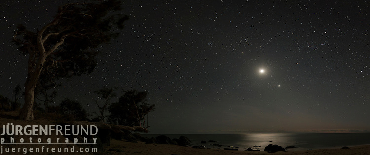 Melaleuca tree on a starry morning with the Moon, Venus and Jupiter