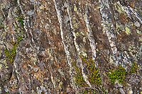 Licjhens, crowberry on rock.<br />