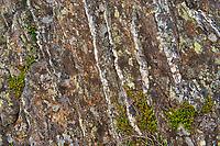 Licjhens, crowberry on rock.<br />Isle aux Morts<br />Newfoundland & Labrador<br />Canada