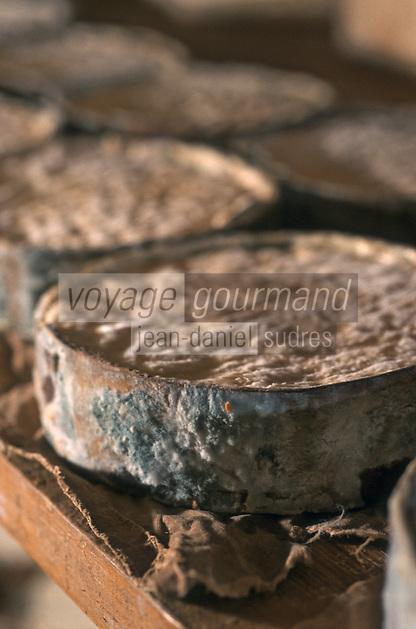 Europe/France/Rhône-Alpes/74/Haute-Savoie/Env d'Abondance/Les Créts Richebourg: Préparation du Vacherin d'Abondance chez Mme Célina Gagneux Agricultrice