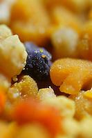 Pollen close up