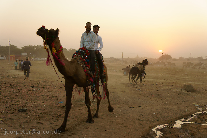 two men riding on camel  at camel market in Pushkar, Rajastan, India