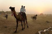 two men riding on camel  at camel market in Pushkar, Rajastan, India