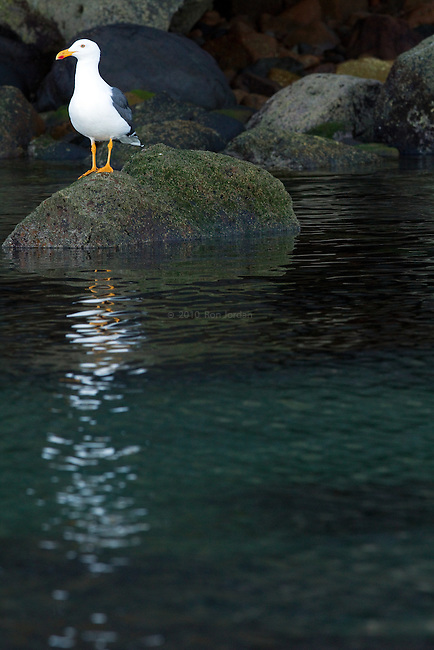 Gull on rock and shimmer on water