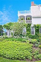 Pachysandra, Cornus dogwood tree, house, hostas, groundcover landscaping in spring with climbing hydrangea on walls