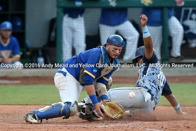 31 May 2016: Nova Southeastern's Andres Visbal (10) scores a run, beating the tag by Lander's John Mangum (left). The Nova Southeastern University Sharks played the Lander University Bearcats in Game 8 of the 2016 NCAA Division II College World Series  at Coleman Field at the USA Baseball National Training Complex in Cary, North Carolina. Nova Southeastern won the game 12-1.