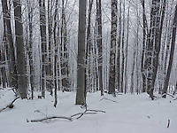 FOREST_LOCATION_90174