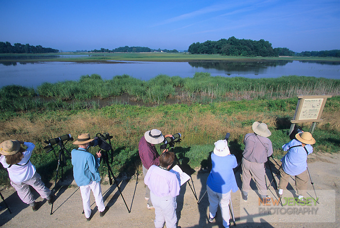 Birdwatching, Bombay Hook National Wildlife Refuge, Kent County, Delaware