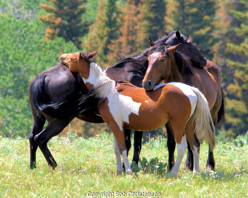 Montana photos of horses