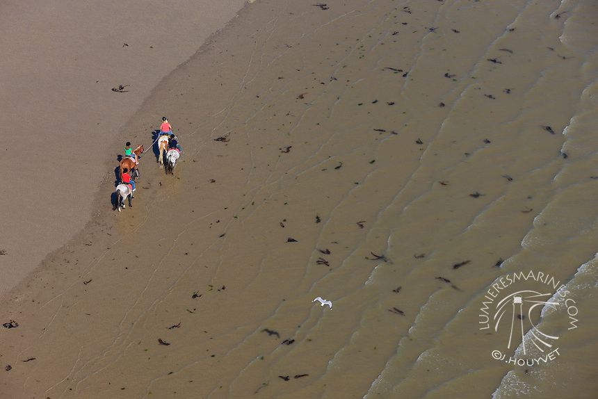 France, Normandie, Manche (50), chevaux sur la plage (vue aérienne) // France, Normandy, Manche, horses on the beach (aerial view)