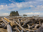 Olympic National Park, WA<br /> Second Beach and sea stack at low tide with piled logs at the beach edge