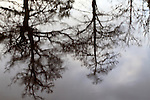 Winter Trees Reflected in a River Knaresborough North Yorkshire England