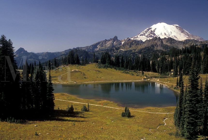 AJ3714, Mount Rainier, Mt. Rainier National Park, Cascades, Chinook Pass, Cascade Range, Washington, View of the snow covered Mt. Rainier and Tipsoo Lake at Chinook Pass in the Cascade Mountain Range in Mount Rainier Nat'l Park in the state of Washington.