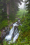 Mount Rainier National Park,  WA  <br /> Small double falls on the Paradise River flowing thru the foggy alpine forest