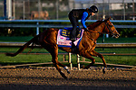 LOUISVILLE, KY - MAY 01: Rayya, trained by Bob Baffert, exercises in preparation for the Kentucky Oaks  at Churchill Downs on May 1, 2018 in Louisville, Kentucky. (Photo by Scott Serio/Eclipse Sportswire/Getty Images)