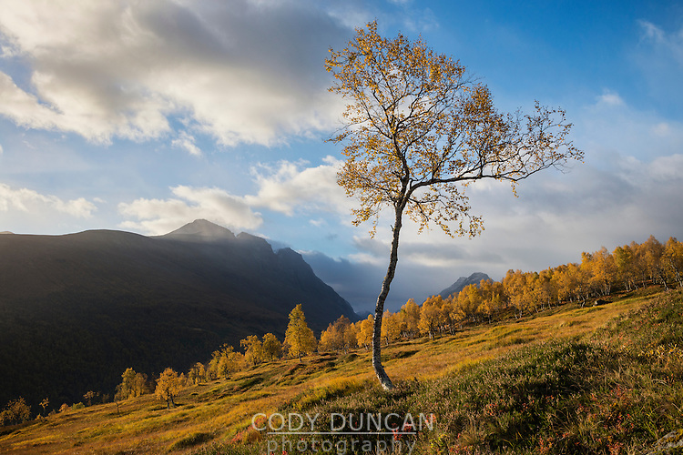 Autumn mountain landscape, Møre of Romsdal, Norway