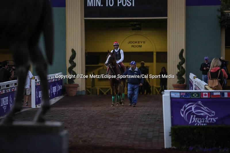 October 28, 2014: California Chrome exercises in preparation for the Breeders' Cup Classic at Santa Anita Park in Arcadia, California on October 28, 2014. Zoe Metz/ESW/CSM