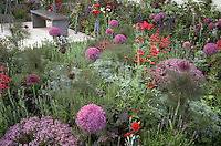 Backyard garden & patio in lavender and red colors with ornamental bronze fennel, lush flowers, herbs Thymes and fennel, bulbs, in late spring, early summer blooms, roses, garden view use, flowers and herbs interplanted