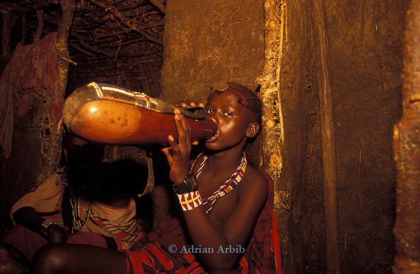 A maasai moran drinks traditional honey beer as part of his initiation ceremony into manhood.  He will live inside the moran village for several months.