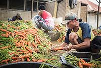 Carrot farm in Bukittinggi, West Sumatra, Indonesia