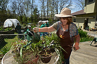 NWA Democrat-Gazette/BEN GOFF @NWABENGOFF<br /> Members of the Garden Club of Rogers prepare Saturday, April 8, 2017, for their 42nd annual Plant &amp; Bake Sale at the home of plant sale chair Phyllis Stair in Rogers. The sale will be held at a new location this year, 1902 N. Dixieland Road in Rogers, on Saturday April 22 from 8:00am to 1:00pm.