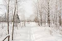 Winter trail with a northwoods home in the background.