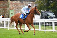 Another Boy ridden by Charlotte Bennett goes down to the start of The Shadwell Racing Excellence Apprentice Handicap Div 1 during Horse Racing at Salisbury Racecourse on 14th August 2019